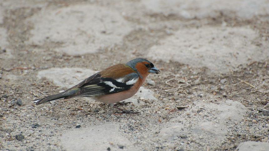 Birdwatching & Wildlife Tours